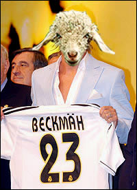 i wanna have your baby, becks