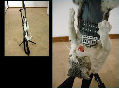 dead cat guitar