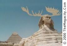 moosey sphinx