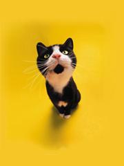 cat mall cat
